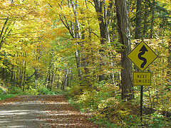 Superior National Forest road